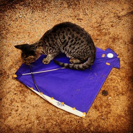 cat of conscience
